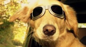 «Les réseaux sociaux pour animaux répondent à un besoin bien humain»