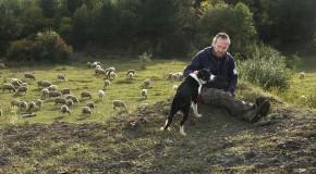 Berger, il veille sur les moutons de la Côte de Delme